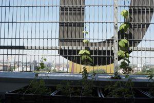 Ausblick vom Dachgarten der Bremer Volkshochschule. Foto: vhs Bremen