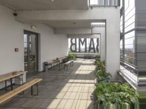 Kräuter und mehr auf dem Dachgarten der Bremer Volkshochschule. Foto: Hektor